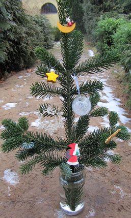 Weihnachtsbaumzweig_